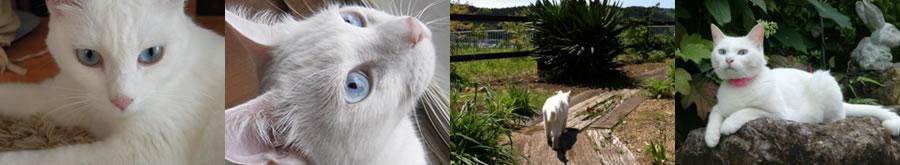 ジュリアローズの猫達